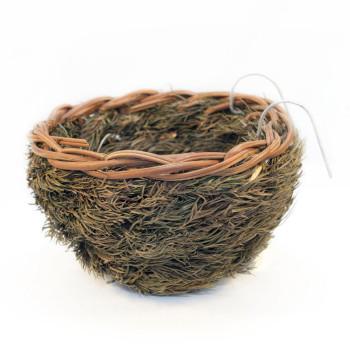 Nest in natuurlijke spar...