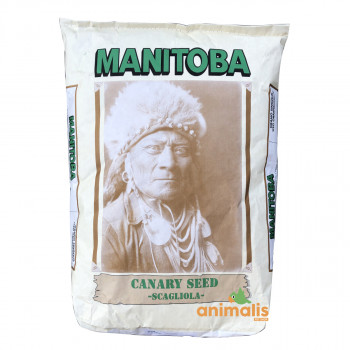 Canary Seed 20kg - Manitoba